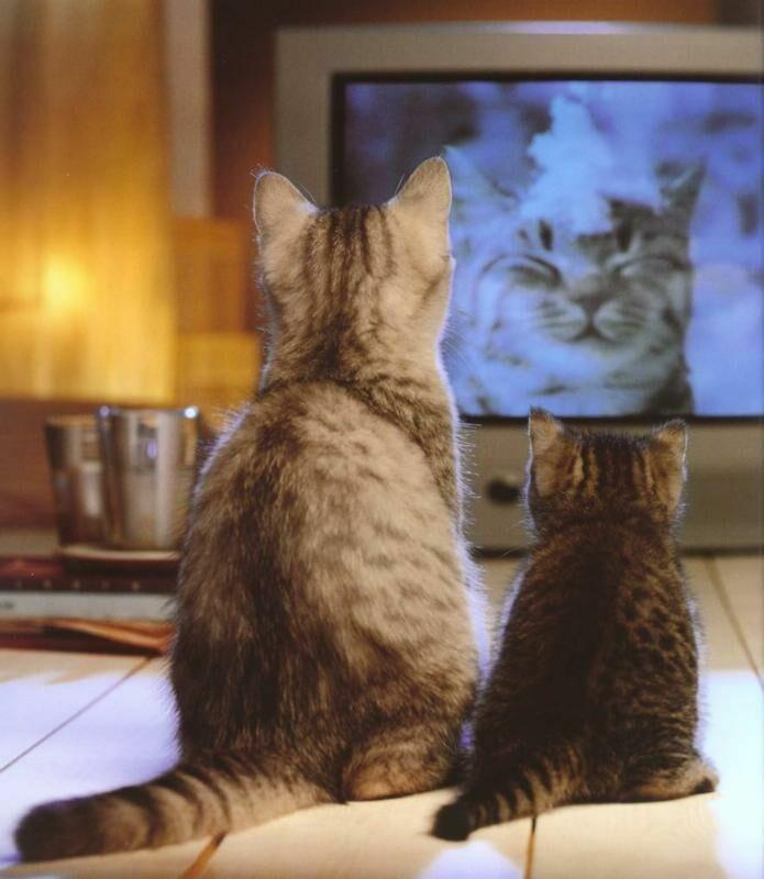 http://grza.net/GIS/Animals/Cats%20Kittens/Cats,%20TV.jpg