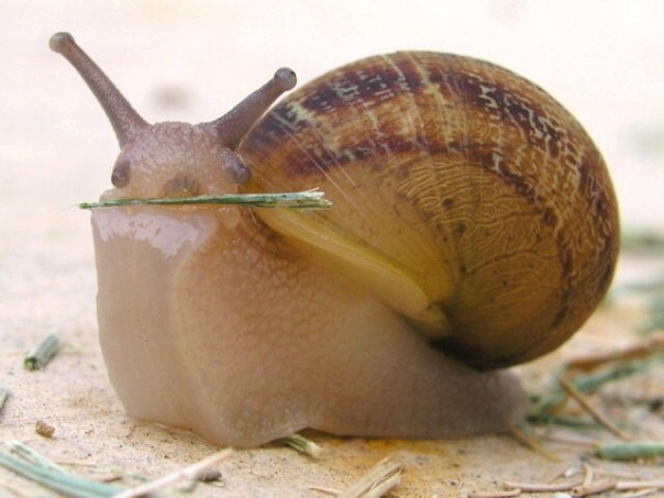 http://grza.net/GIS/Animals/Snail%20Grass.jpg