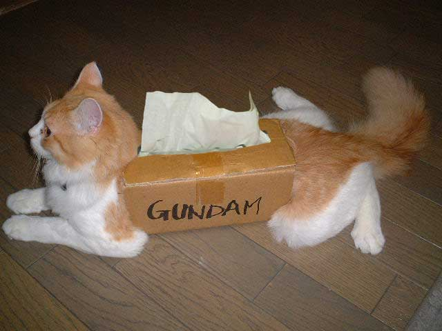 Gundam%20Box%20Cat.jpg